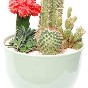 Cactus cocktail
