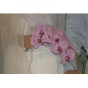 Разливающаяся орхидея