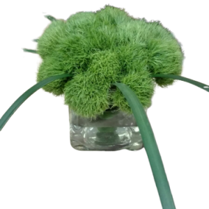 ראש דשא