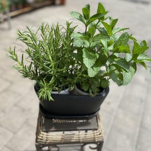 A pair of spices in a black planter