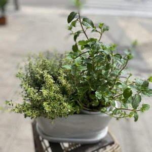 A pair of spices in a white planter