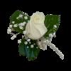 פרחי גורדון פרחים