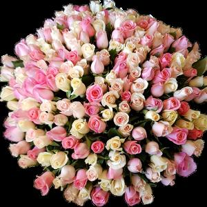 ורדים מעורב יוקרתי